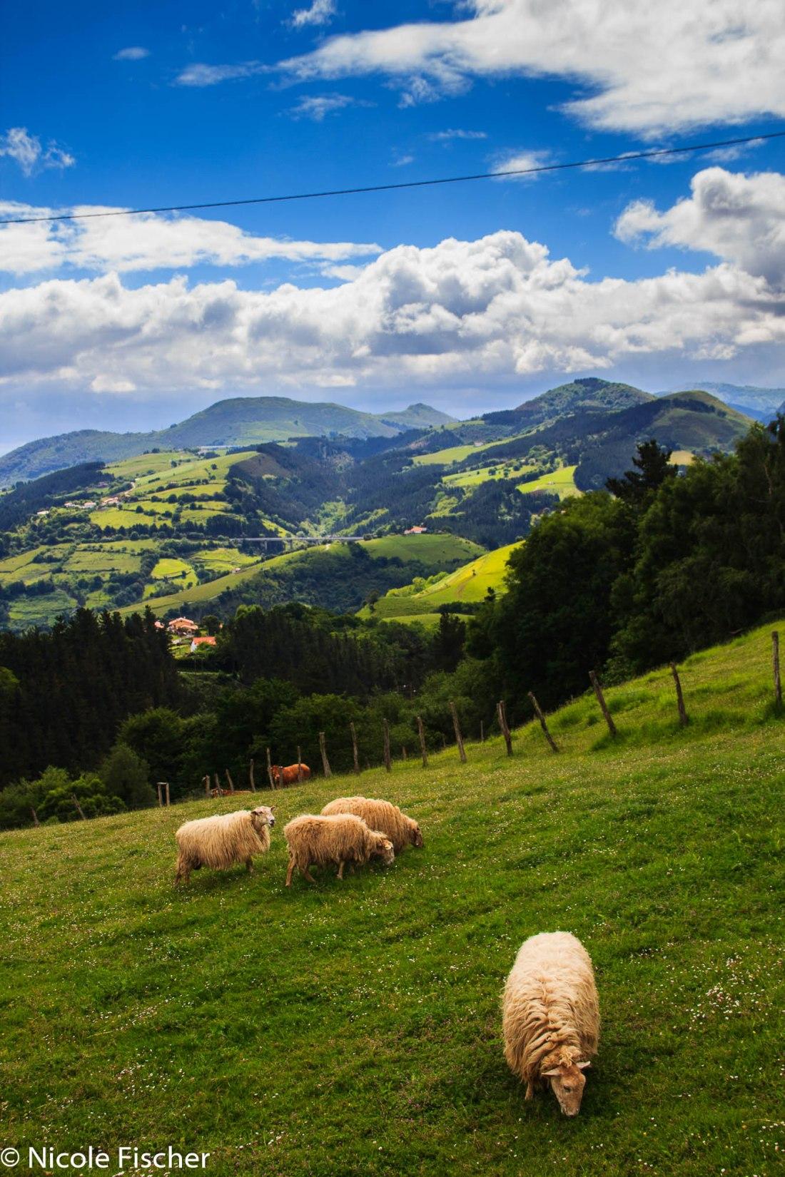 Baskenland Baumeler (22 von 92)